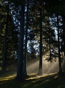 Rayons du Soleil à travers la forêt au pied du Testavoyre